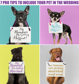Get The Trend: 7 Ideas To Include Your Pet In The Wedding