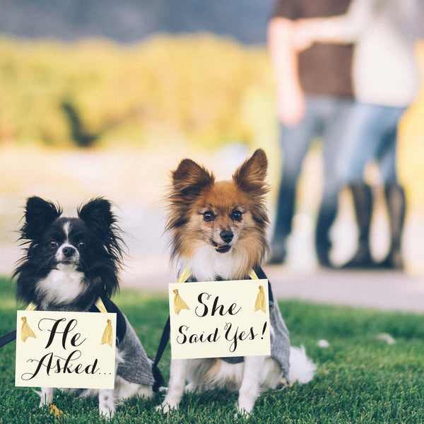 He asked + she said yes signs