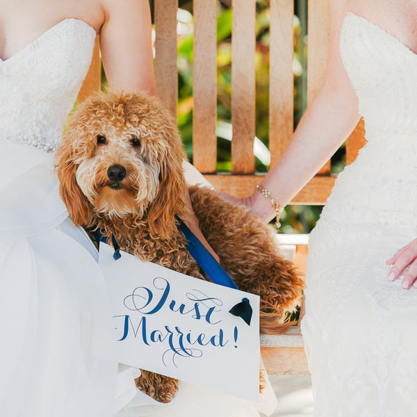 Just married dog sign