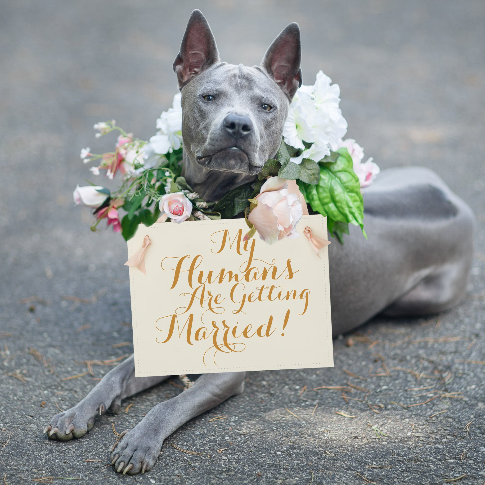 Dog Wedding Signs My Humans are Getting Married Proposals +