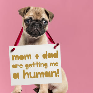 Mom & Dad Are Getting Me A Human Dog Sign