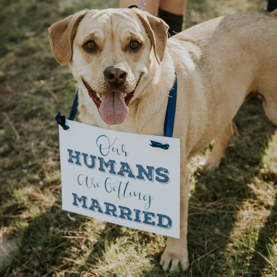 Our Humans Are Getting Married Dog Sign