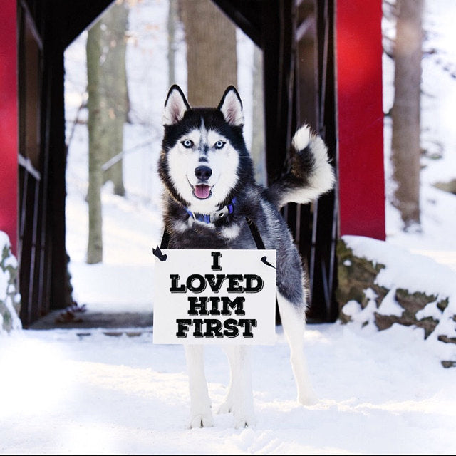 i loved him first dog sign for wedding engagement announcement