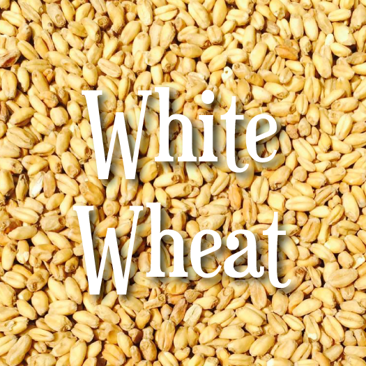 White Wheat