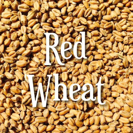 Swaen Red Wheat