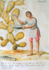 Cochineal in Mexico