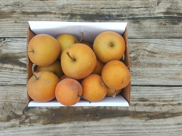 Asian Pear Box