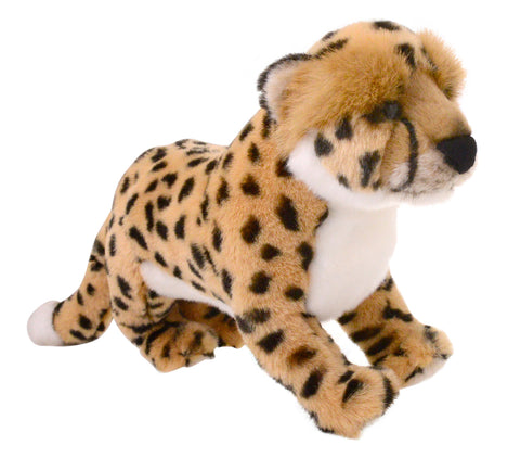 Animalia Cheetah