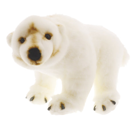 Animalia Polar Bear