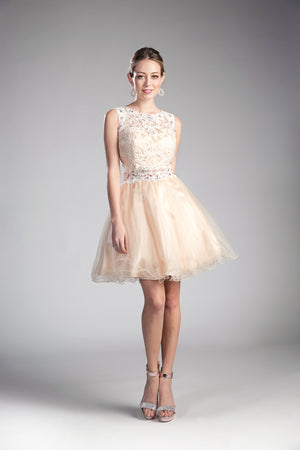 Lace Short Dress With High Neckline | Norma Reed