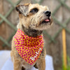 Personalised Giraffe Print Dog Bandana