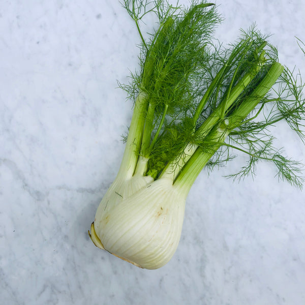 Fennel (1 unit)