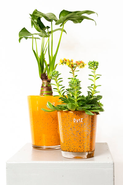 Dutz Vase Medium - Blumen Grollitsch