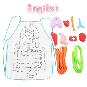 Anatomy Apron - 5econds.co