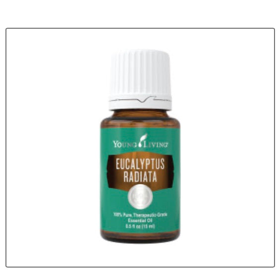 Eucalyptus Radiata Essential Oil (Young Living Essential Oils)