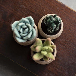 Succulents Kit