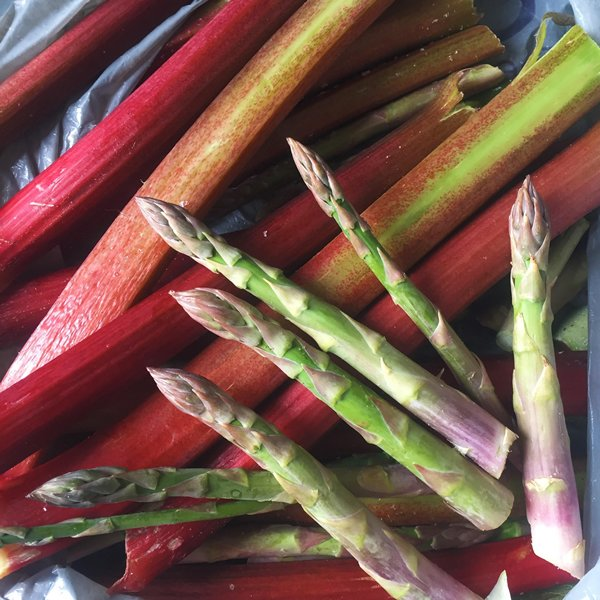 Rhubarb and Asparagus picking