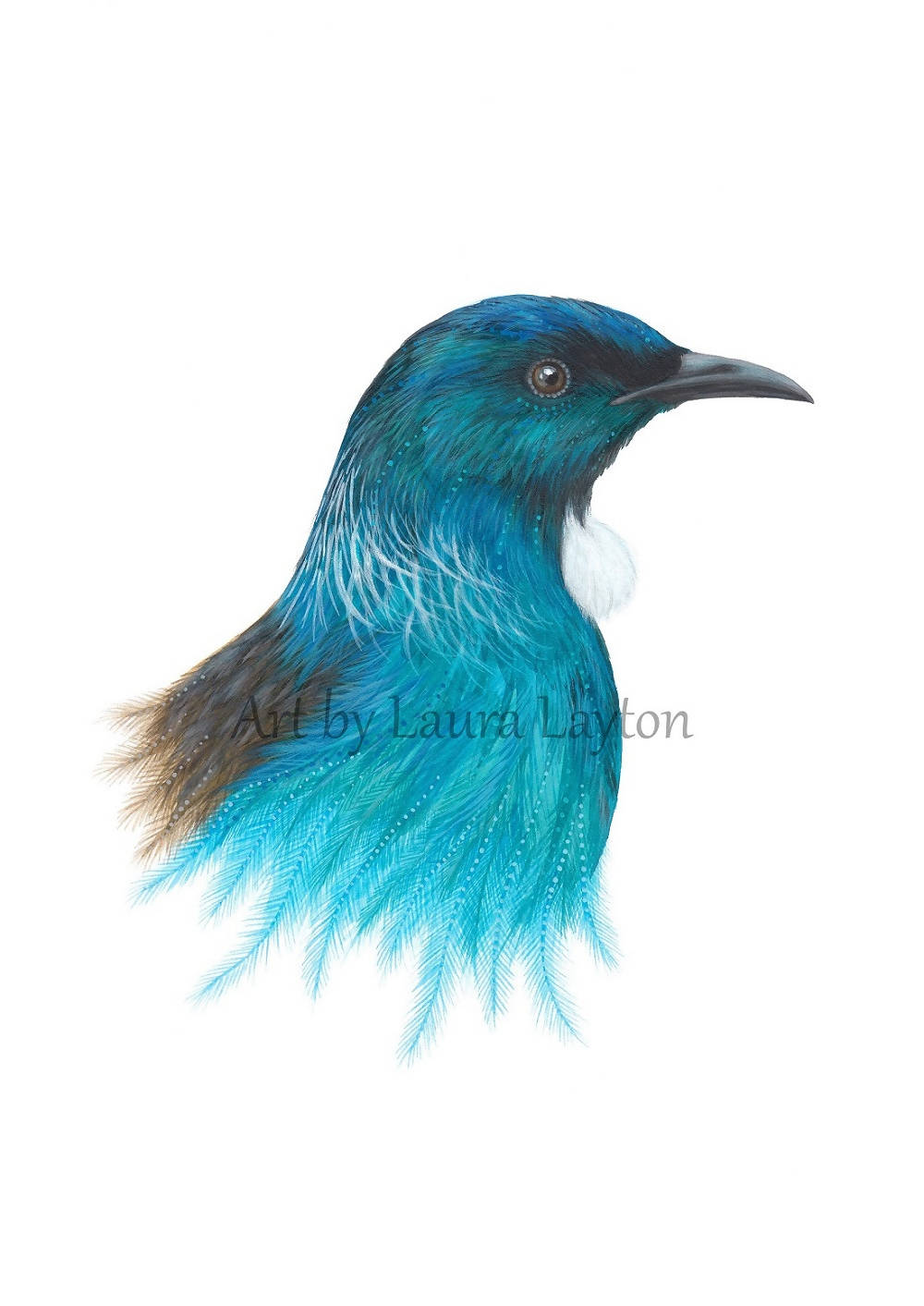 Tui in Blue