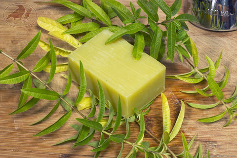 Lemon Verbena Hempseed Oil Soap