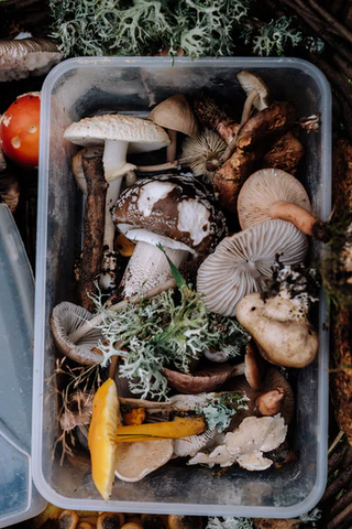 Multiple mushrooms in a container
