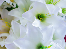 Load image into Gallery viewer, Cream Trumpet Lily Bush