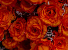 Load image into Gallery viewer, Orange Giant Open Rose Bush