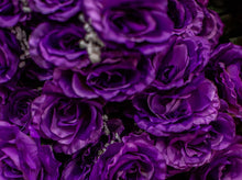 Load image into Gallery viewer, Purple Giant Open Rose Bush