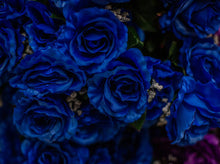 Load image into Gallery viewer, Blue Giant Open Rose Bush