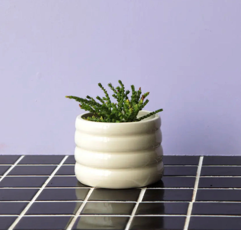 Marshmallow Planter