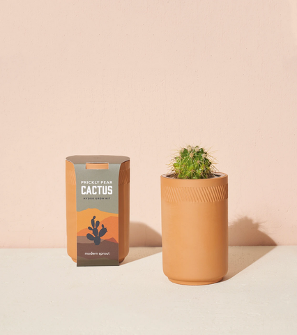 Terracotta Grow Kit - Prickly Pear Cactus