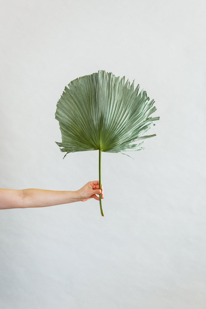 Load image into Gallery viewer, Medium Non Flared Dried Palm Stem