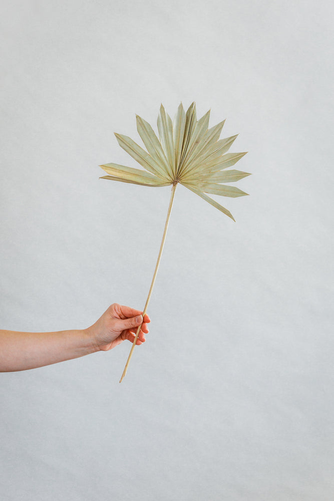 Load image into Gallery viewer, Small Dried Palm Fan-Lt.Sage