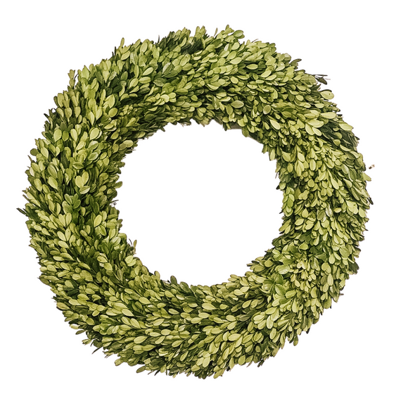 Boxwood Wreath 24in