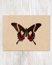 Load image into Gallery viewer, Butterfly Specimen B Card