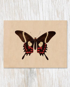 Butterfly Specimen B Card