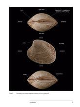 Load image into Gallery viewer, Bivalve Seashells of Western South America: Marine Bivalve Mollusks from Northern Perú to Southern Chile