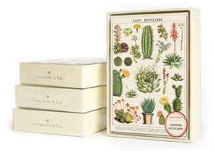 Cacti & Succulents Boxed Notes