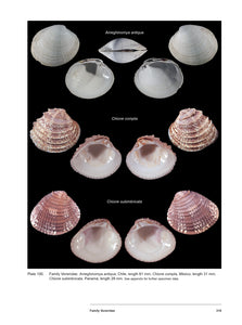 Bivalve Seashells of Western South America: Marine Bivalve Mollusks from Northern Perú to Southern Chile