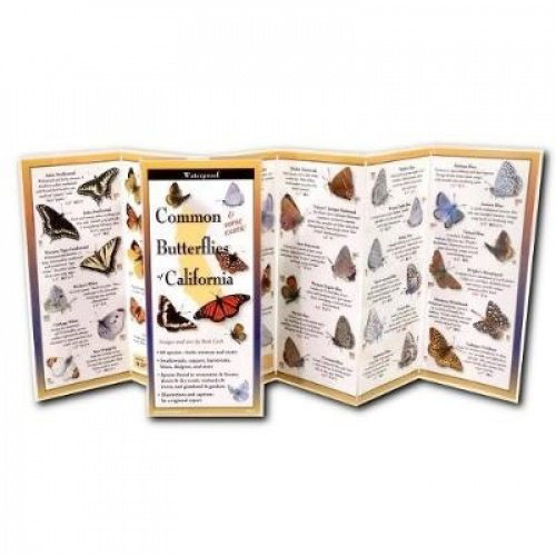 Common Butterflies of California
