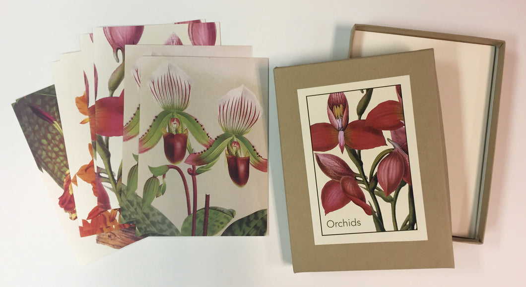 Orchid Boxed Notes