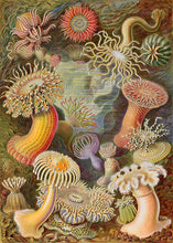 Load image into Gallery viewer, Sea Anemones 160pc Wooden Puzzle