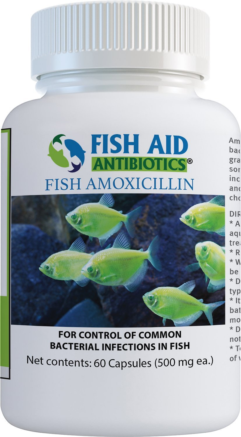 Fish Aid (500 mg 60 Count) Antibiotics Amoxicillin Capsules Fish Medication By Fish Aid Antibiotics