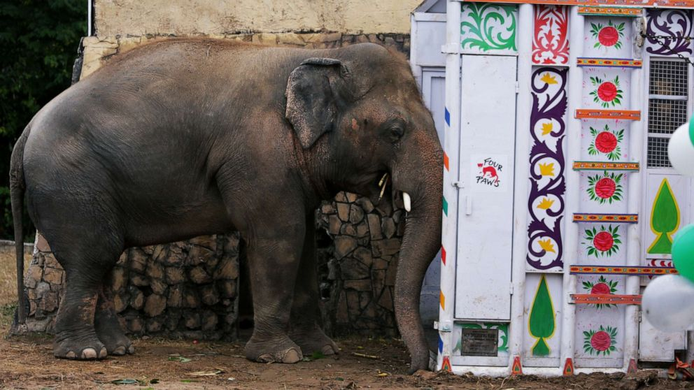 'World's loneliest elephant' gets some help from Cher during resettlement to Cambodia