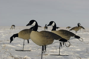 SX Lesser Combo Canada Goose Flocked