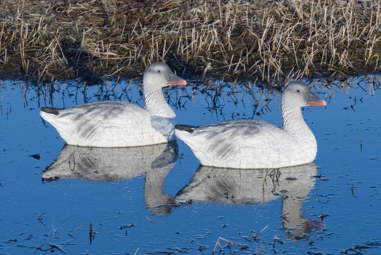 SX Juvie Snow Goose Sentry Floaters (4 Pack)