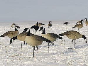SX Full Body Canada Goose Lesser Painted