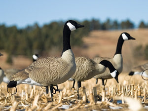 SX Life Size Full Body Canada Goose Multi Pack Painted