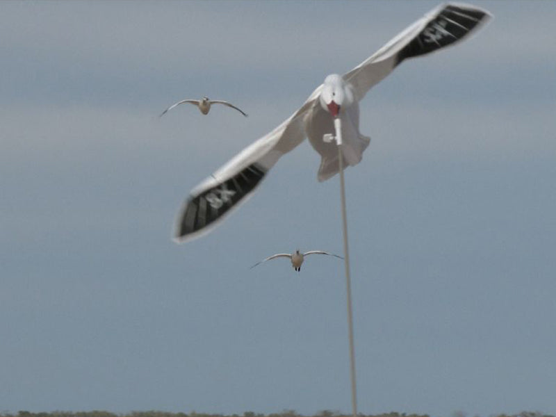SX Snow Goose Flyer Combo Kit