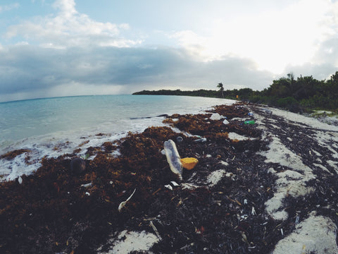 Belize Plastic Beaches | Arisa Yoon Photography