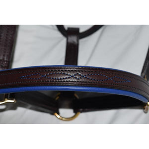 Clever with Leather Halter